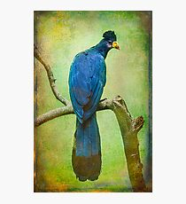 Finer Feather Friends- The Grand Tufted HuttonBird Photographic Print