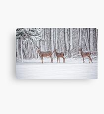 Winter Visit Canvas Print