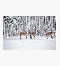 Winter Visit Photographic Print