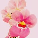 Miltonia orchid by bubblehex08