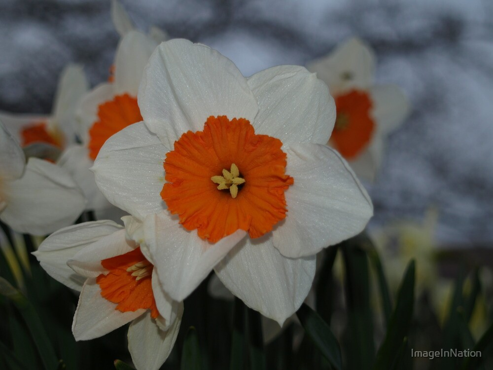 Be Daff not to by ImageInNation