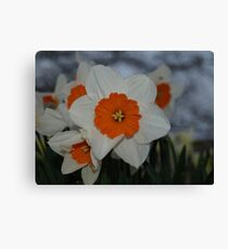 Be Daff not to Canvas Print