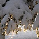 Early Morning Snow. by Christopher Clark