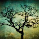 Tree silhouette by Carlos Restrepo