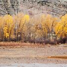 A Slice of Autumn by Kim Barton