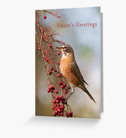 Robin and Red Berries Greeting Card
