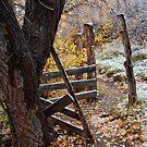 Autumn on Josie's Path by Kim Barton