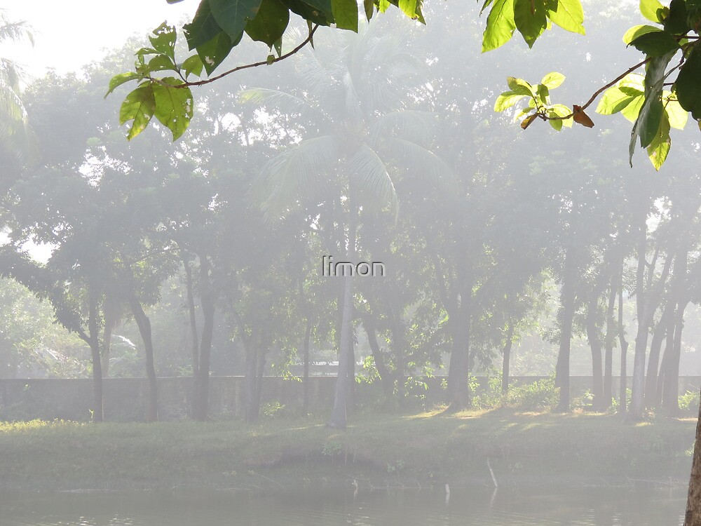 morning light by limon