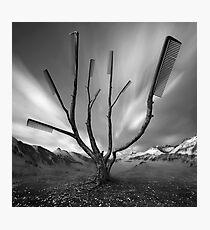 Dandruff Tree Photographic Print