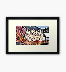 Wild nature - huskies Framed Print