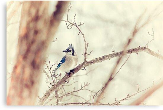 Blue Jay Winter by Karol Livote