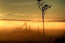 Golden Morning Light (2) by Christine Smith