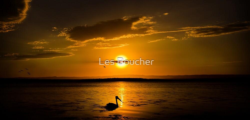Pelican Sunset by Les Boucher
