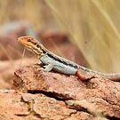 Tawny Rock Dragon by EnviroKey