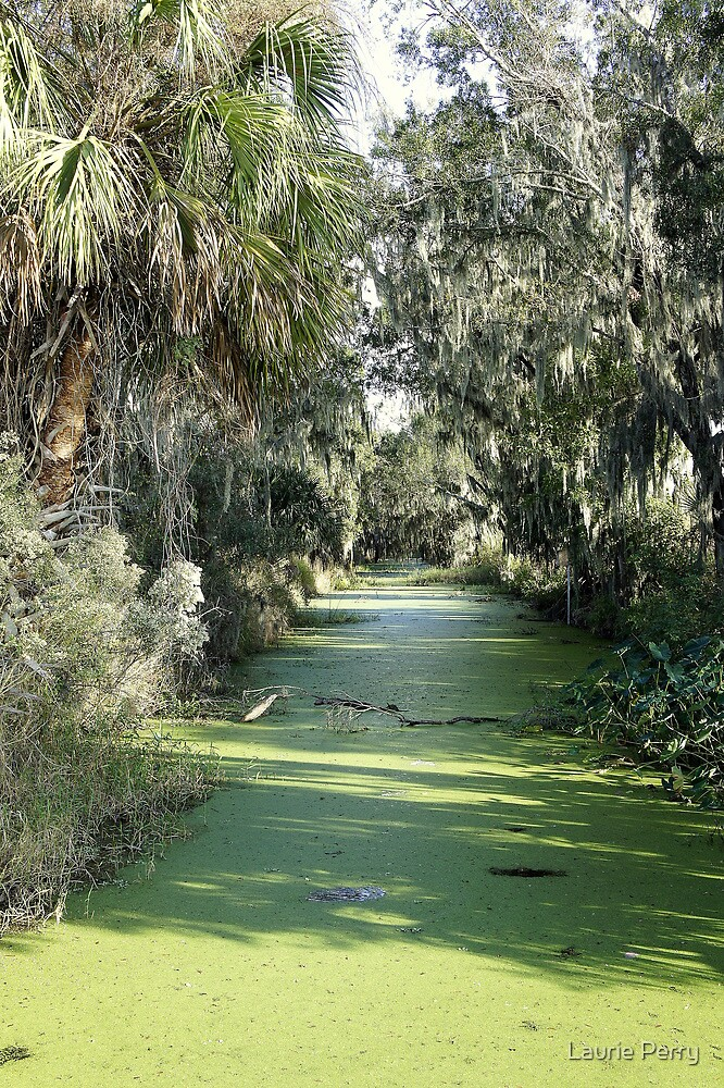 Swamp by Laurie Perry