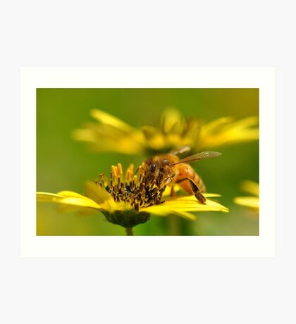 Bee nice! Art Print