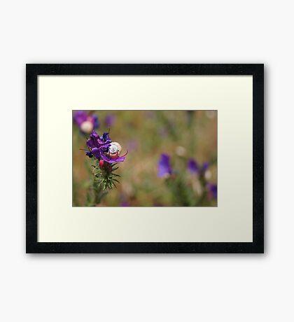 Snail In A Flower Framed Print