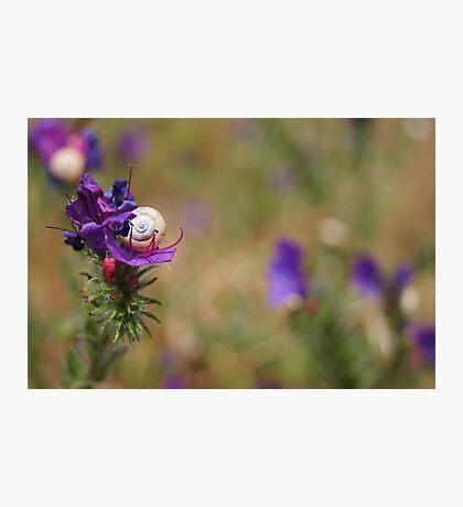 Snail In A Flower Photographic Print