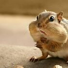 """Who me?  I didn't take the peanuts!"" by Lori Deiter"