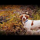 """Alert Britt"" by Fotography by Felisa ~"