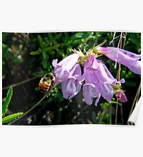 Busy bumble bee Poster