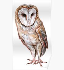 Barn owl drawing Poster
