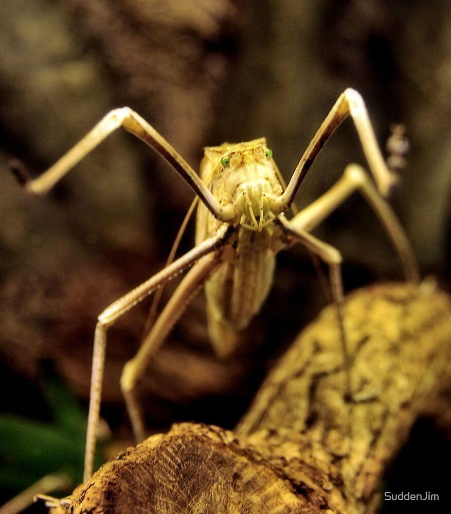 Bug Eyes, Really! by SuddenJim