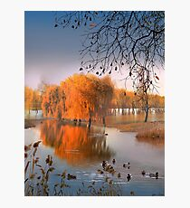 Flooded Willows Photographic Print