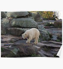 Big Bear Paws Poster