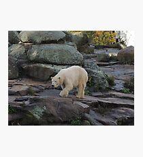 Big Bear Paws Photographic Print