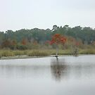 BEAR CREEK CYPRESS ON A GLOOMY DAY by May Lattanzio