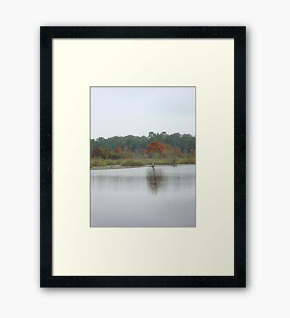 BEAR CREEK CYPRESS ON A GLOOMY DAY Framed Print