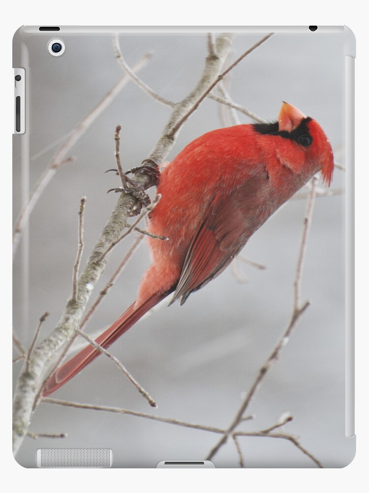 Cardinal IPad Case by barnsis