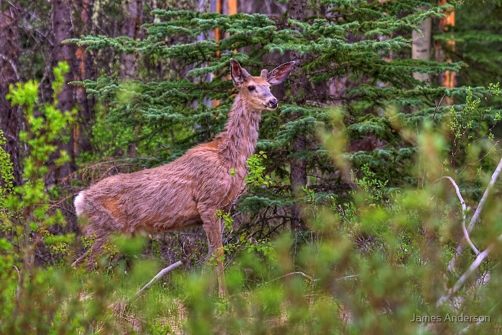 Scraggly Muley by JamesA1