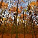 Autumn  - My wonderful Galicia by Andrzej Goszcz. Featured 5 star Excellence Valerie Anne Kelly. by © Andrzej Goszcz,M.D. Ph.D