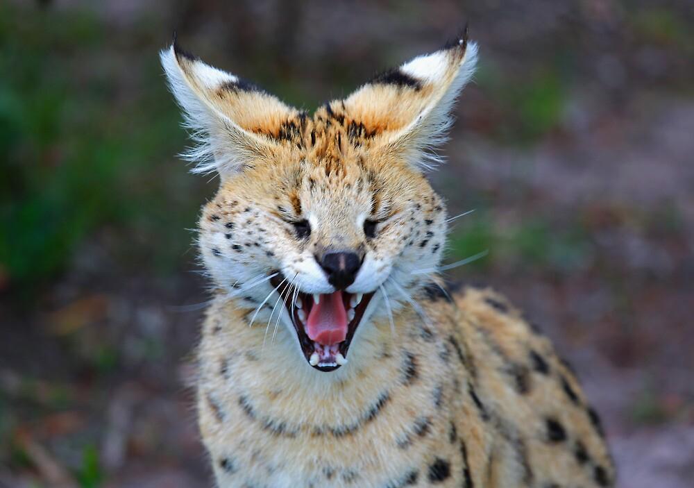 Yawn by Cameron B