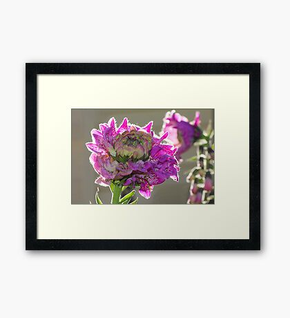 Standing out from the mob Framed Print