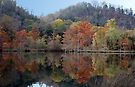 The Colors Of Beavers Bend by Carolyn  Fletcher