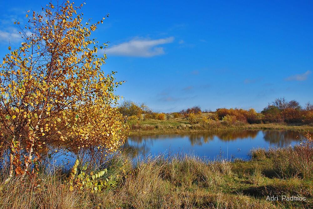 Autumn in Het Zeepe 3 by Adri  Padmos