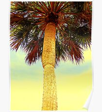 Sabal Palm Poster