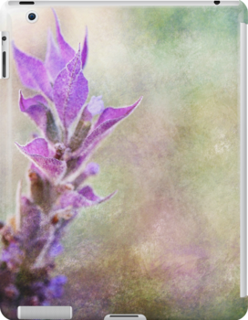 Lavender Flame by Astrid Ewing Photography