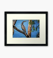 Regal.. Framed Print