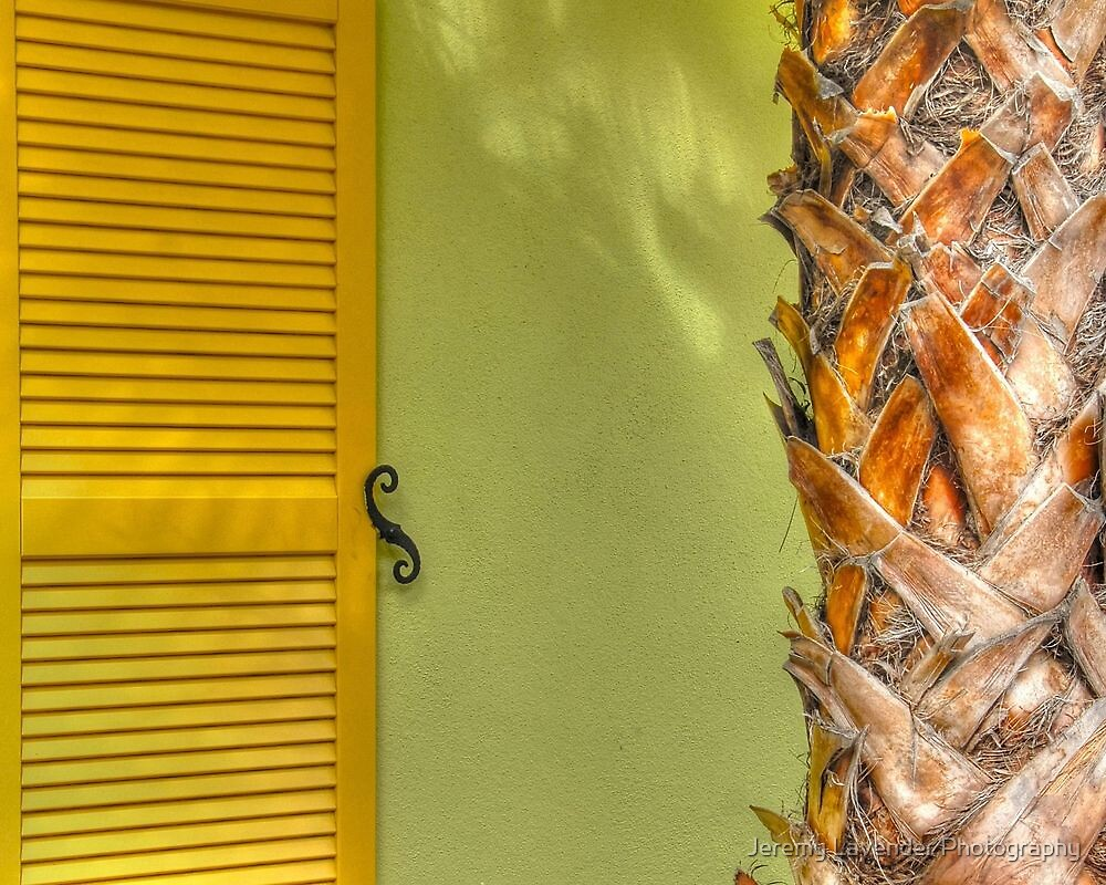 Tropical Thoughts in Paradise Island, The Bahamas by Jeremy Lavender Photography