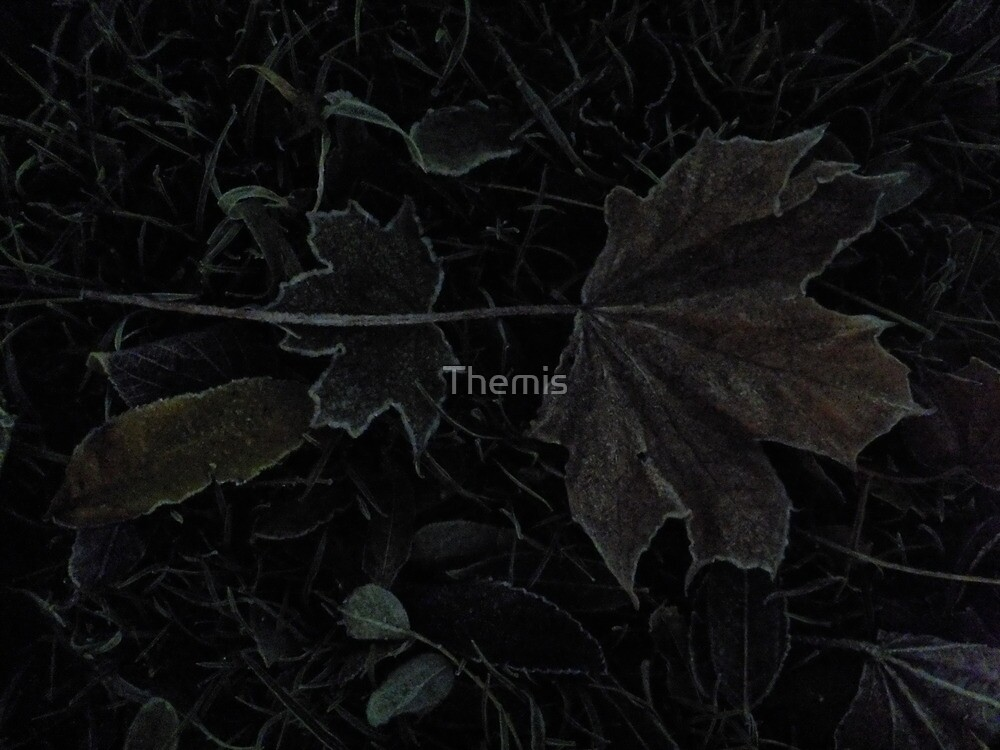 Autumn - First Frost (High ISO) by Themis