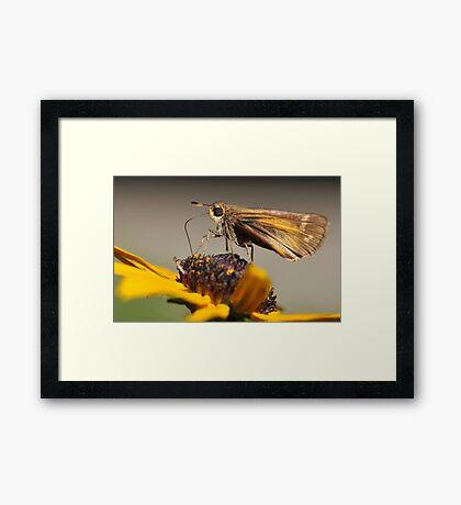 Skipper Framed Print