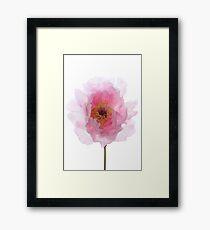Pink Tree Peony. Framed Print
