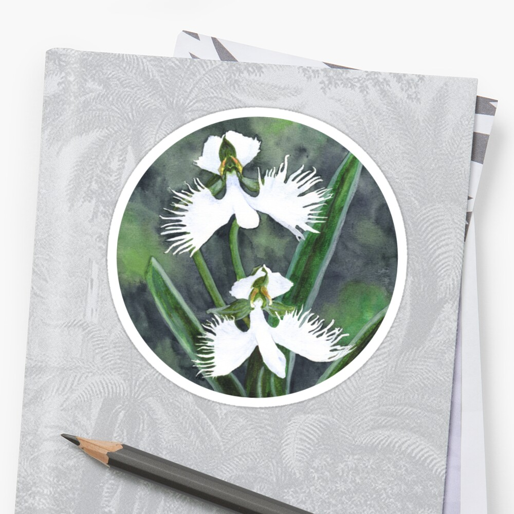 White egret orchid flowers habenaria radiata stickers by white egret orchid flowers habenaria radiata by savousepate mightylinksfo Image collections