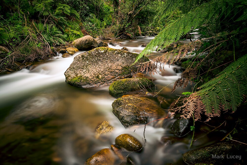 A Shaded Retreat by Mark  Lucey