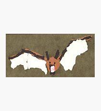 AEC Vampire Bat Photographic Print