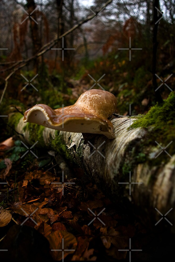 Forest Floor by Country  Pursuits